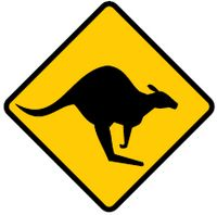 look out for kangaroos
